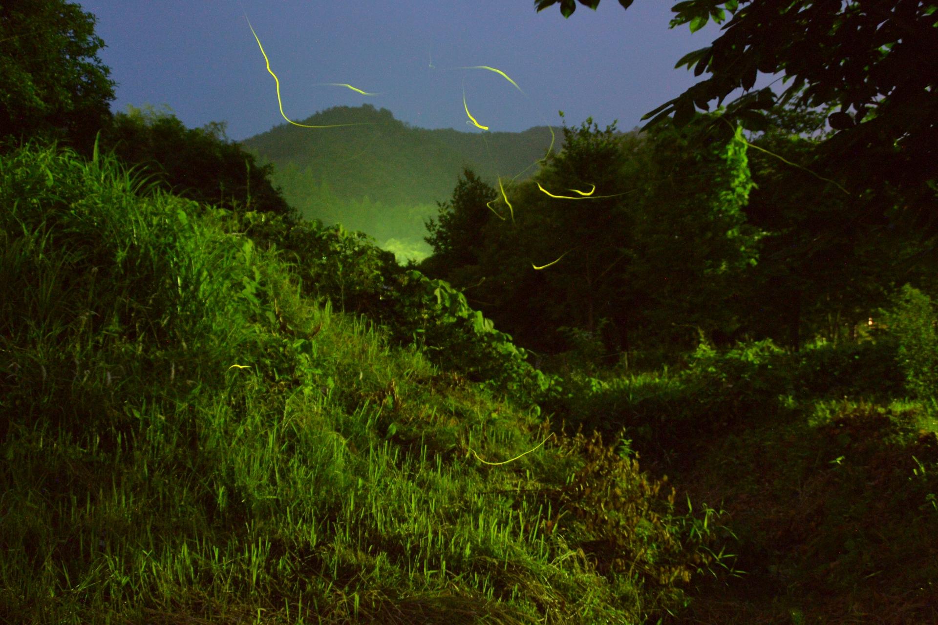 滋賀県でほたるを見る絶景ポイントはここだ!
