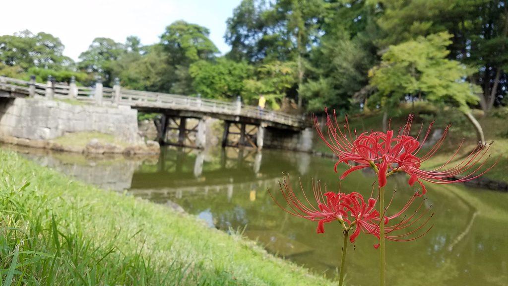 玄宮園と彼岸花